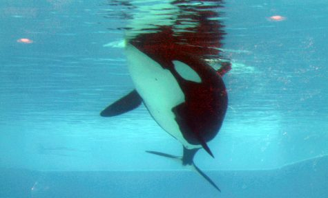 The Truth about SeaWorld